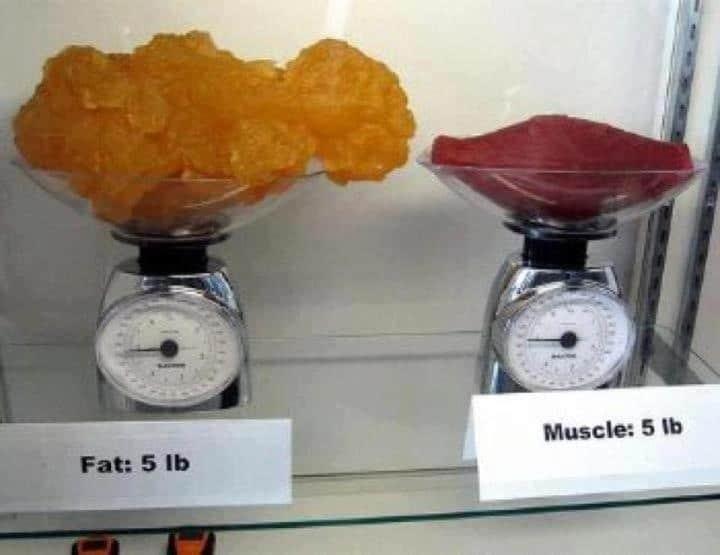 """Fett im Vergleich zu Muskeln (Volumen/Masse) Warum klappt das Abnehmen nicht? Was ich in der Ernährungsberatung oft als Fragen bekam, waren """"Cathi, ich bin extrem #dick und will#abnehmen - wie schaffe ich es endlich?"""", """"Ich schaffe es nicht abzunehmen,trotz Sport"""", """"Cathi,wie schaffe ich es 5 Kilo oder10 Kilo abzunehmen?"""", """"Cathi,ich will abnehmen, aber es macht nicht Klick."""" Also möchte ich dir jetzt die besten Wege zum Abnehmen und Muskeln aufbauen geben. Ebenso denperfekten #Ernährungsplan zum Abnehmen (gesund undnachhaltig)"""