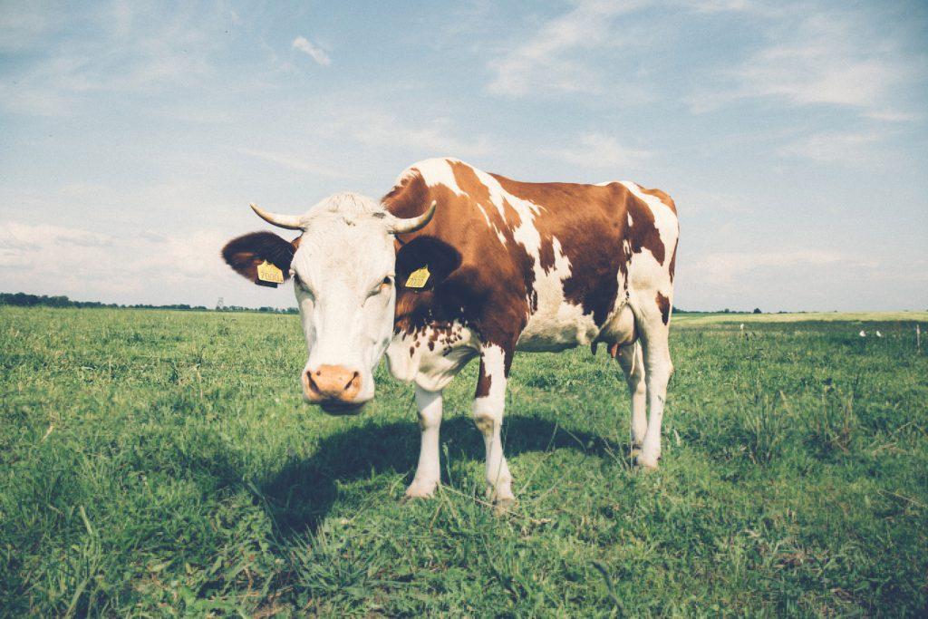 Ist Milch ungesund? - Ist Kuhmilch gesund oder ungesund? Welche Alternativen gibt es? Und hat Milch mit Akne zu tun oder anderen Erkrankungen? Welche Studien belegen die Fakten?