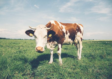 Ist Milch ungesund?