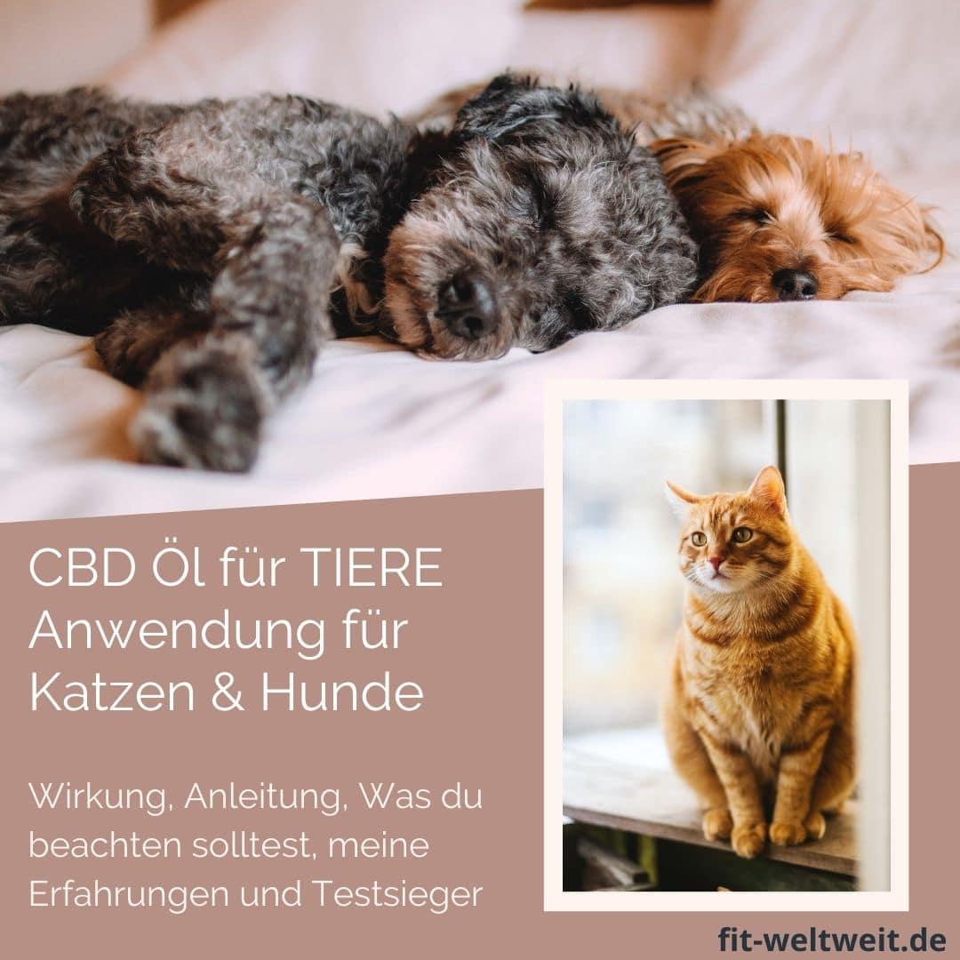 CBD ÖL ERFAHRUNG HUNDE KATZEN Anwendung Wirkung Dosierung worauf achten